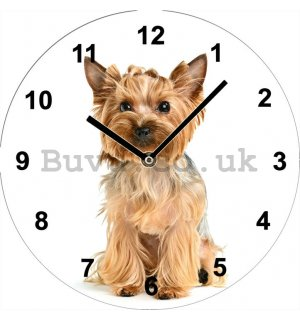 Glass wall clock - Yorkshire terrier