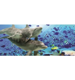 Wall Mural: Undersea world - 104x250 cm