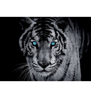 Wall Mural: Black and white tiger - 254x368 cm