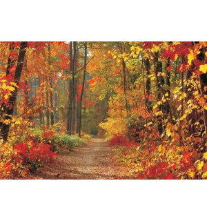 Wall mural vlies: Autumn forest - 152,5 x 104 cm