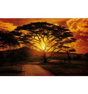Wall mural vlies: African sunset - 152,5 x 104 cm