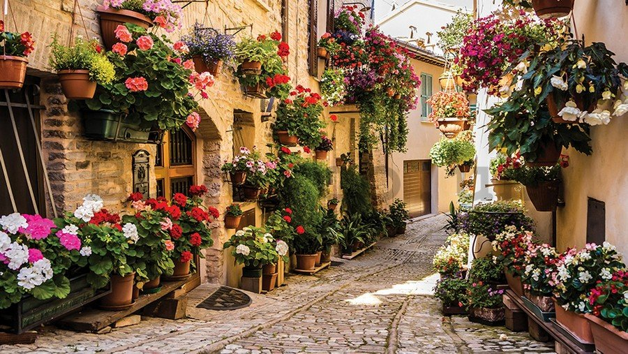 Vlies wall mural : Street with flowers - 184x254 cm
