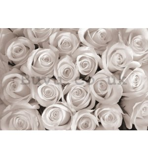 Wall mural vlies: White Rose - 152,5x104 cm