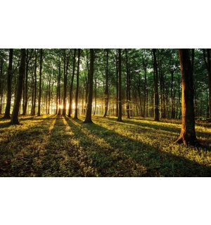 Wall mural vlies: Forest sunset - 152,5x104 cm