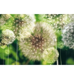 Painting on canvas: Dandelions (2) - 75x100 cm