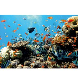 Painting on canvas: Coral reef - 75x100 cm