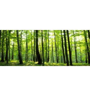 Wall Mural: Woods (2) - 104x250 cm