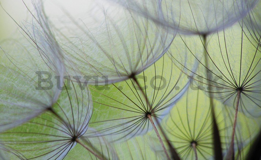 Painting on canvas: Dandelions (detail) - 75x100 cm