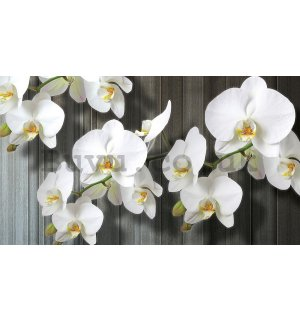 Painting on canvas: White Orchids (3) - 75x100 cm