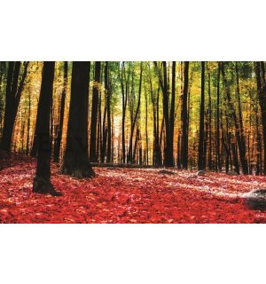 Painting on canvas: Forest (3) - 75x100 cm