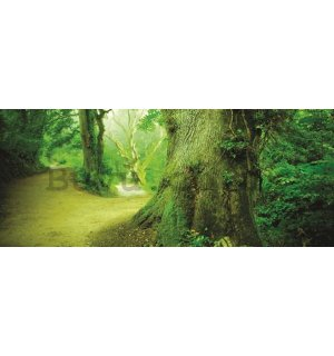 Wall Mural: Magical forest - 104x250 cm
