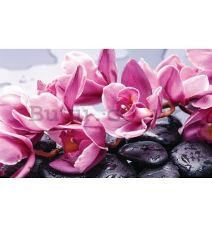 Wall Mural: Spa stones and pink orchids - 184x254 cm