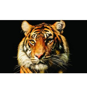 Wall Mural: Tiger - 254x368 cm