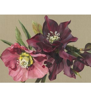 Painting on canvas: Sarah Caswell, Nightshade Hellebore