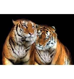 Wall Mural: Two Tigers - 254x368 cm