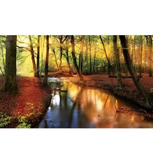 Wall Mural: Forest brook (2) - 184x254 cm
