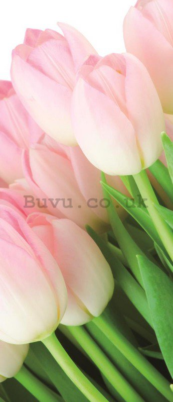 Wall Mural: Bunch of tulips - 211x91 cm