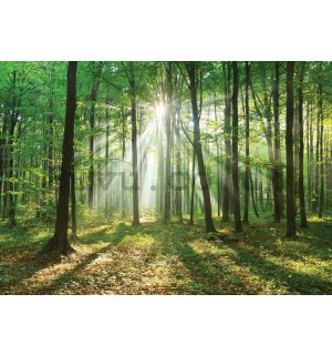 Wall Mural: Sun in the Forest (3) - 254x368 cm