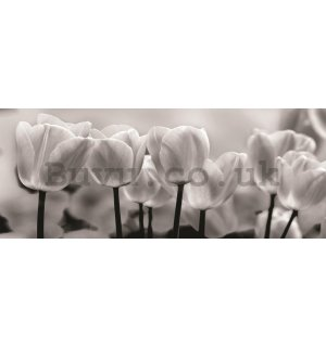 Wall Mural: White and black tulips - 104x250 cm