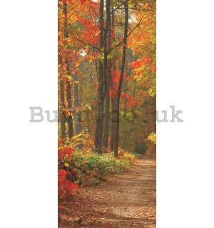 Photo Wallpaper Self-adhesive: Autumn forest - 211x91 cm