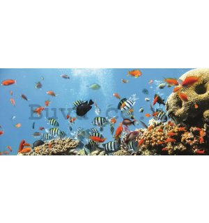 Wall Mural: Coral reef - 104x250 cm