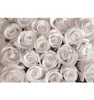 Wall Mural: White Rose - 184x254 cm