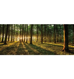 Wall Mural: Forest sunset - 104x250 cm