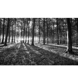 Wall Mural: Black and white forest (1) - 254x368 cm