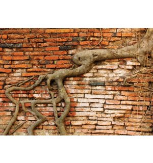 Wall Mural: Roots - 254x368 cm