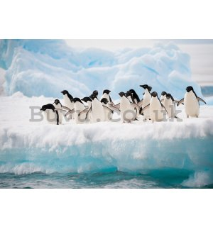 Wall Mural: Pinguins - 254x368 cm