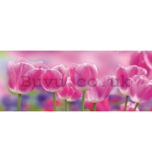 Wall Mural: Violet tulips - 104x250 cm