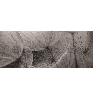 Wall Mural: Dandelion (black and white detail) - 104x250 cm