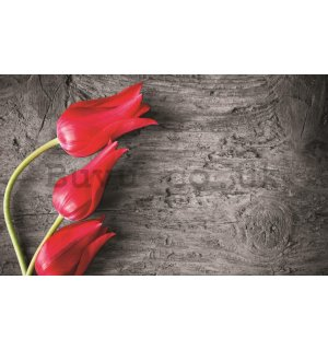 Wall Mural: Red tulips - 254x368 cm