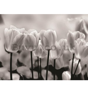 Wall Mural: White and black tulips - 184x254 cm