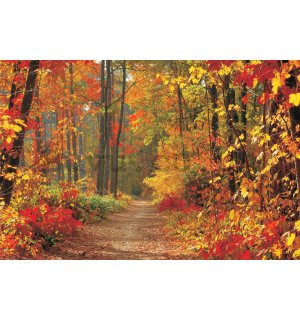 Wall Mural: Autumn Forest - 254x368 cm