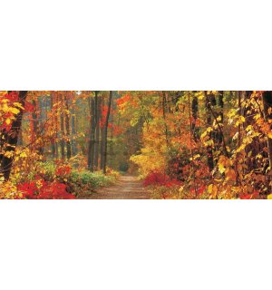 Wall Mural: Autumn forest - 104x250 cm