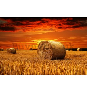 Wall Mural: Bales of straw in the field  - 184x254 cm