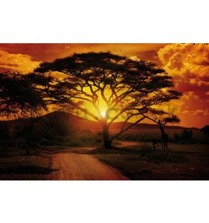Wall mural vlies: African sunset - 254x368 cm
