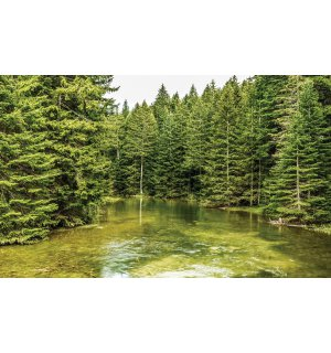 Vlies wall mural : Forest pool (2) - 184x254 cm