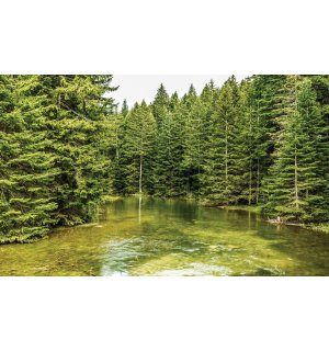 Wall mural vlies: Forest pool (2) - 254x368 cm