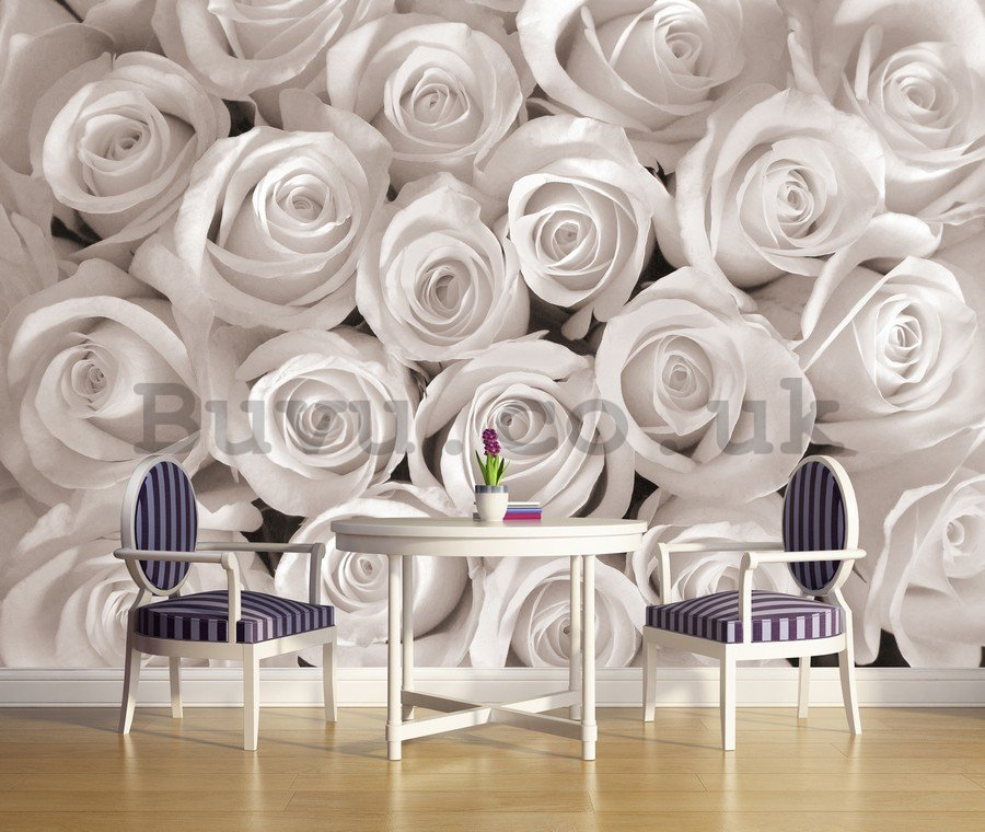 Wall mural vlies: White Rose - 254x368 cm