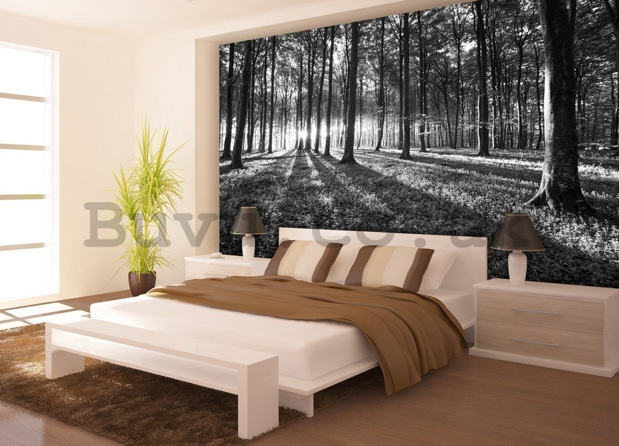 Wall mural vlies: Black and white forest (1) - 254x368 cm