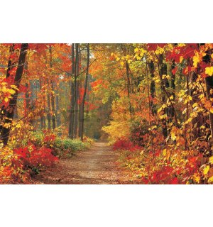 Vlies wall mural : Autumn Forest - 184x254 cm