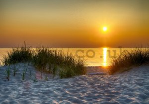 Wall Mural: Sunset at the beach (5) - 184x254 cm