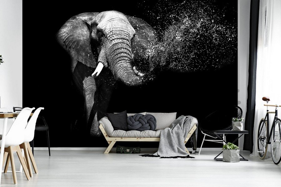 Wall Mural: Black and white elephant - 184x254 cm