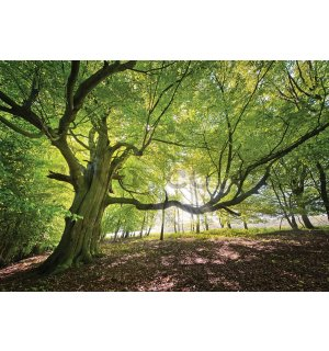 Wall Mural: Sun in the Forest (5) - 184x254 cm