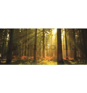 Wall Mural: Forest sunrise - 104x250 cm