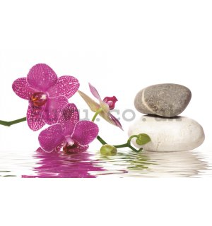 Wall Mural: Orchid with stones - 254x368 cm