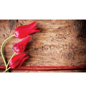 Wall mural vlies: Red tulips (2) - 184x254 cm