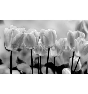 Wall mural vlies: White and black tulips - 184x254 cm